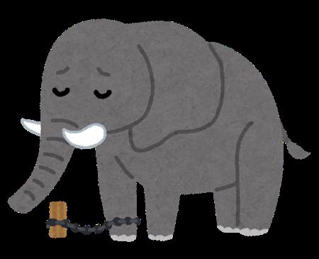 鎖で繋がれた象